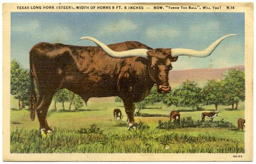 how to make money with longhorn cattle