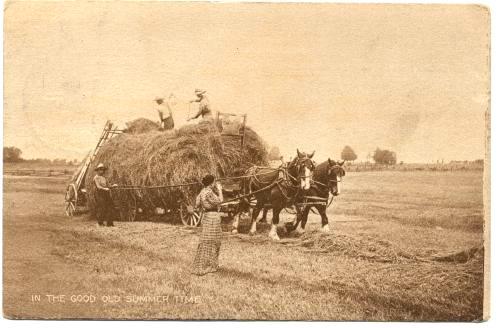 Farming Horse Drawn Hayrack And Loader C1910