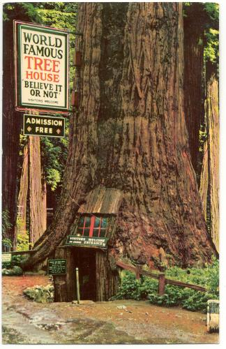 California Redwood Highway Tree House